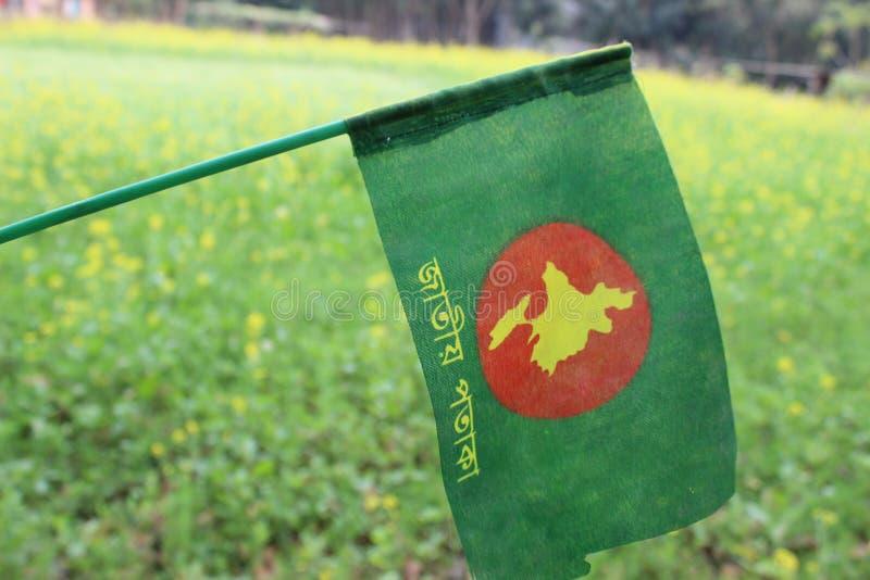 Bd flag Bangladesh Green with Flag stock photos