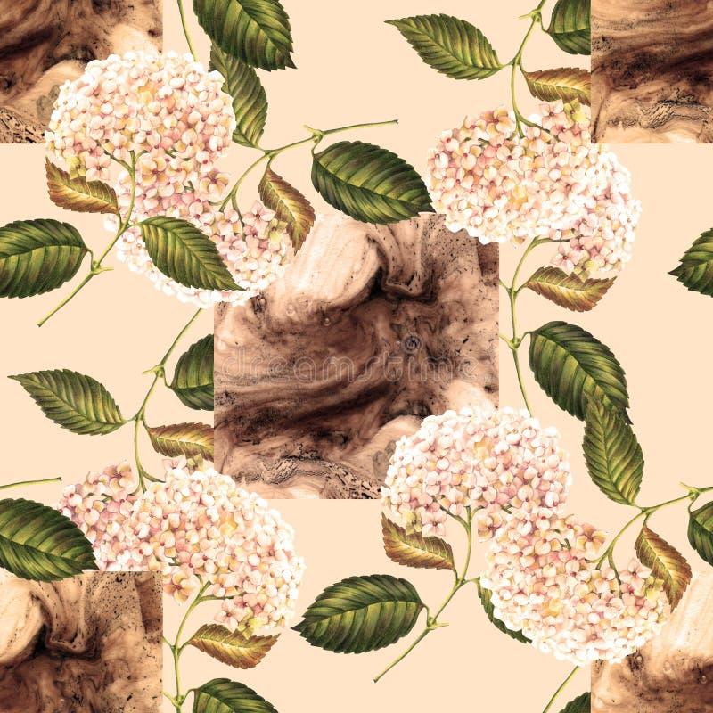 Beżowa łasa i kwiaty hortensja na beżowym tle Dla projekta bezszwowy wz?r ilustracji