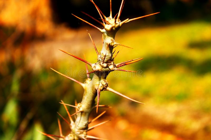 Be Aware of the Thorns royalty free stock images