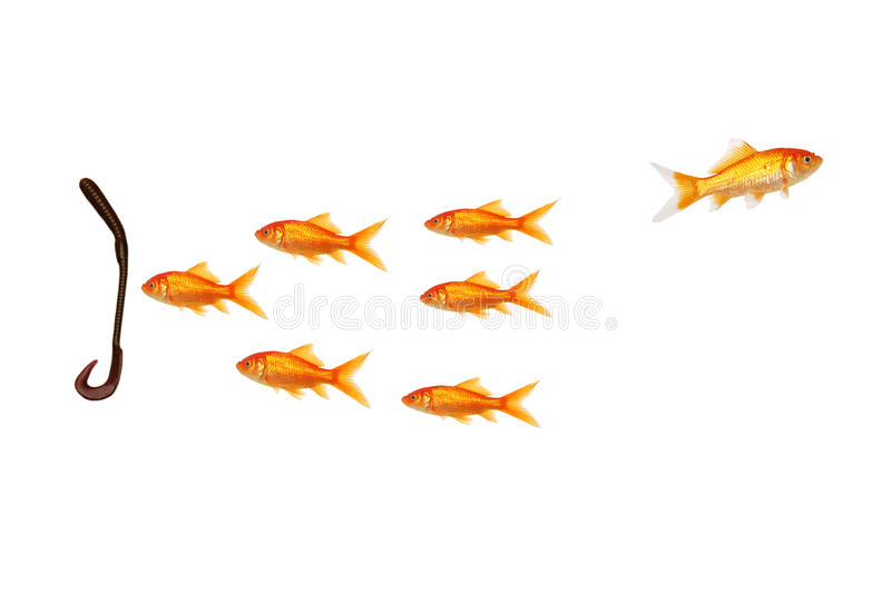 Be an individual don't follow the pack. Isolated be an individual don't follow the pack on white background royalty free stock photography