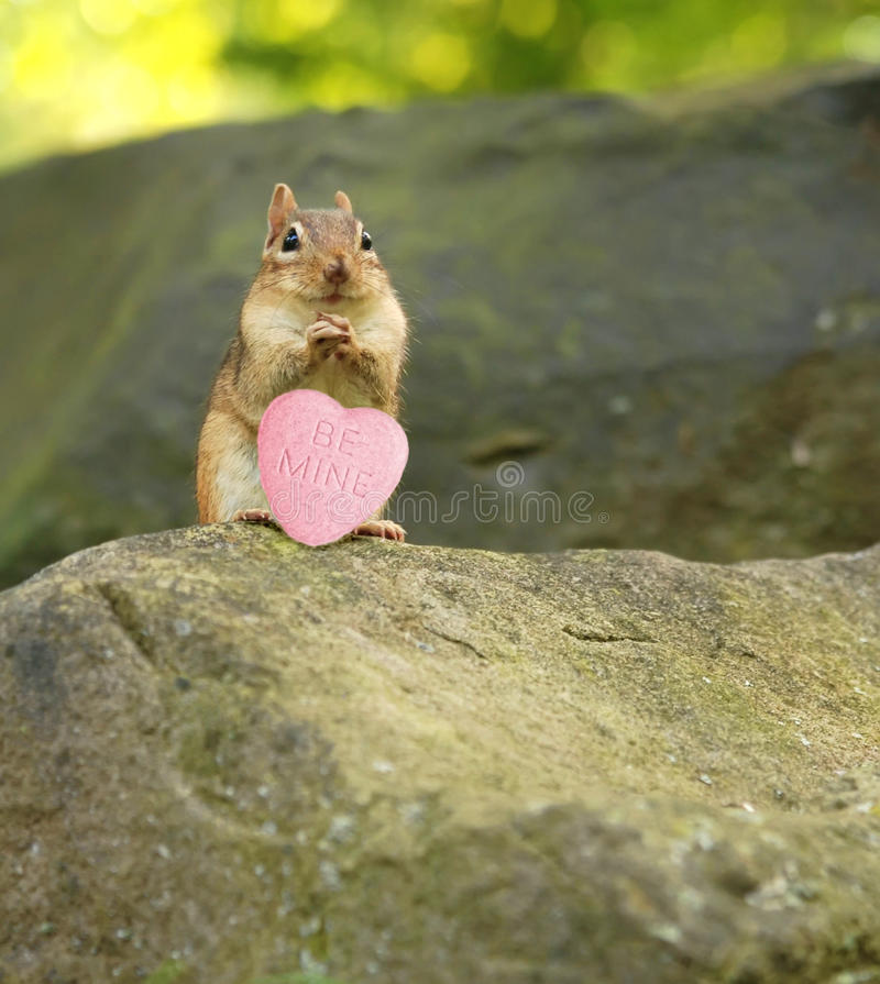 Download Be mine stock image. Image of candy, heart, little, furry - 17632001