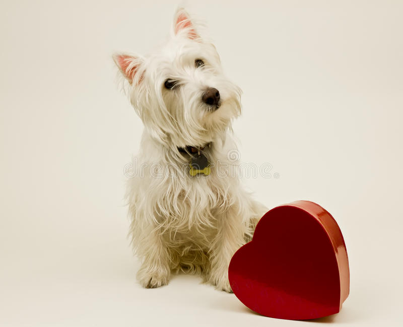 Download Be My Valentine stock image. Image of chocolates, canine - 23019725