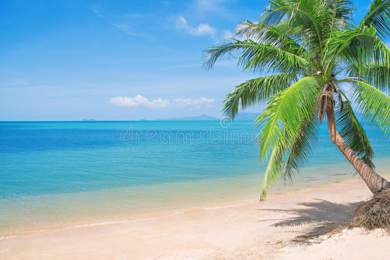 Beaautiful Strand mit Kokosnusspalme und -meer lizenzfreies stockbild