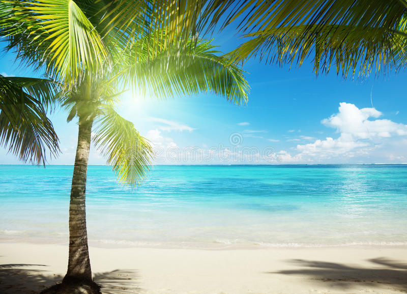 Download Beach stock photo. Image of holidays, polynesia, shadow - 15157028