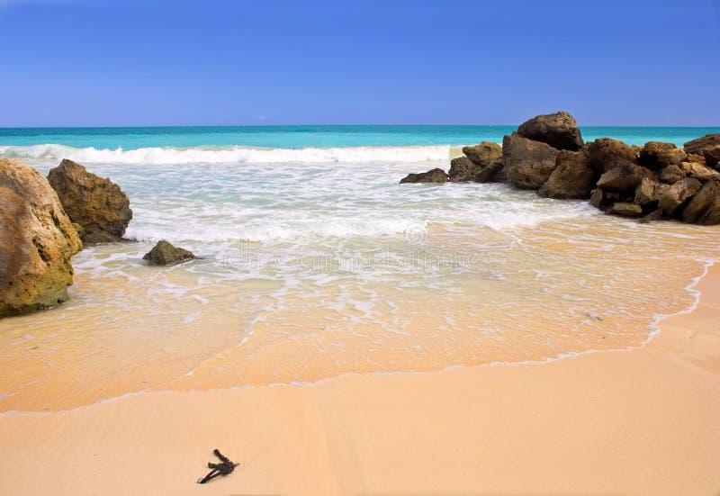 The beach stock image