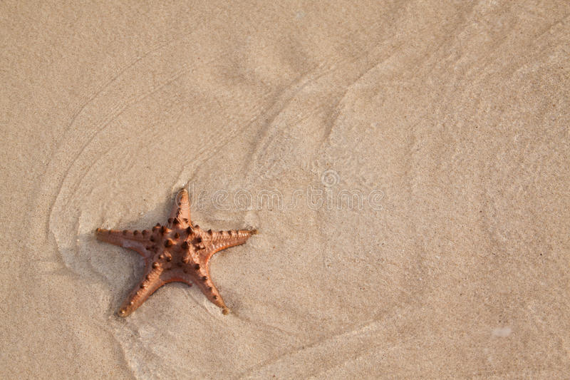 Download Beach stock image. Image of starfish, outdoors, star - 19002477