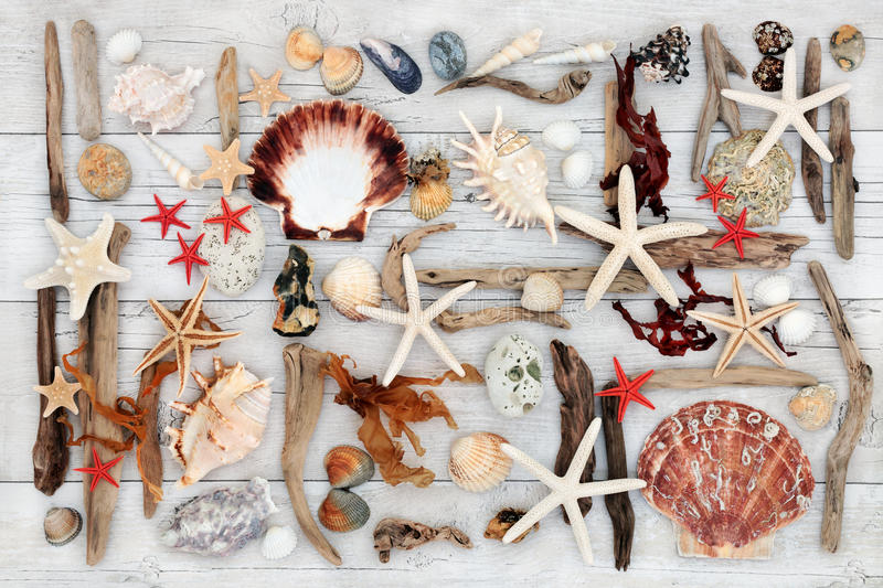 Beach Art Abstract Collage. Beach abstract art with selection of seashells, driftwood, seaweed and rocks on distressed white wood background stock image