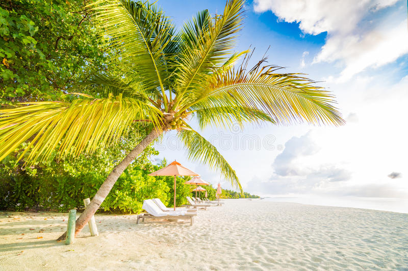 Beach background. Beautiful beach landscape. Tropical nature scene. Palm trees and blue sky. Summer holiday and vacation concept. Vacation holidays background stock images