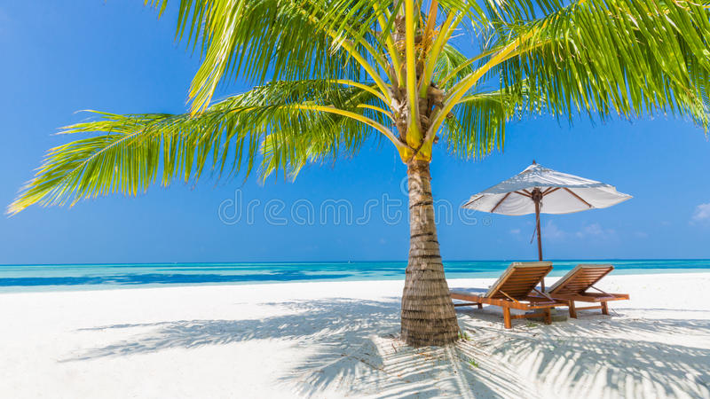 Beach background. Beautiful beach landscape. Tropical nature scene. Palm trees and blue sky. Summer holiday and vacation concept. Vacation holidays background royalty free stock images