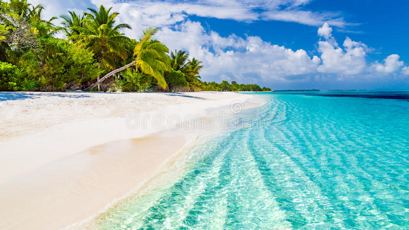 beach background images koni polycode co
