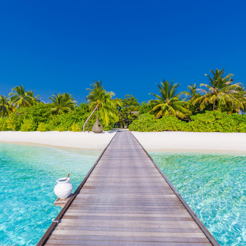 Download Beach Background Beautiful Landscape Tropical Nature Scene Palm Trees And Blue