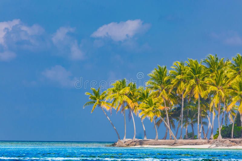 Beach background. Beautiful beach landscape. Tropical nature scene. Palm trees and blue sky. Summer holiday and vacation concept. Vacation holidays background stock photo