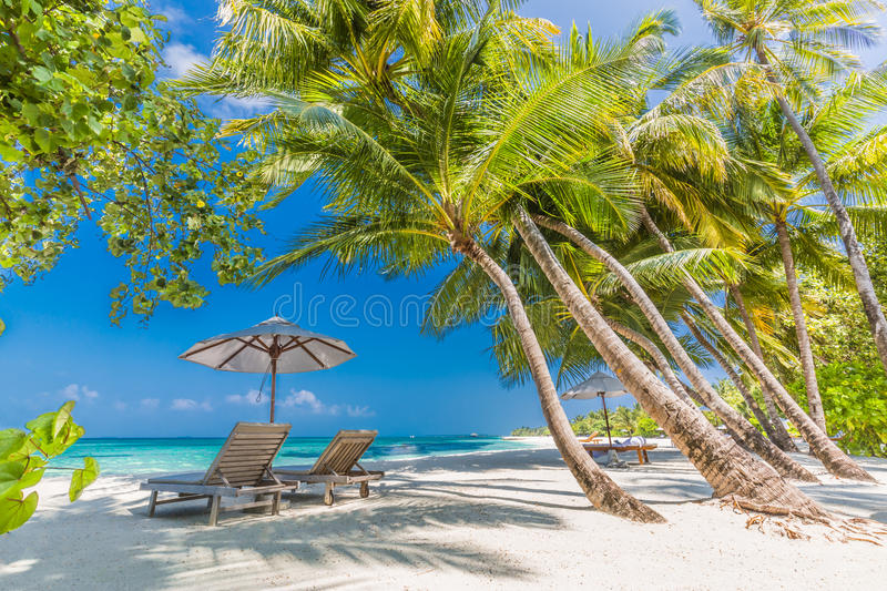 Beach background. Beautiful beach landscape. Tropical nature scene. Palm trees and blue sky. Summer holiday and vacation concept. Vacation holidays background royalty free stock photo