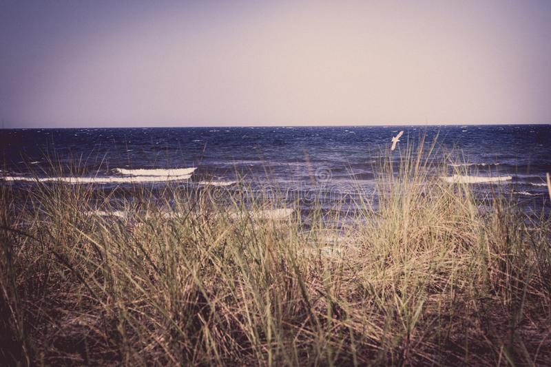 The beach of the Baltic Sea wind and swell. A beach of the Baltic Sea wind and swell royalty free stock images
