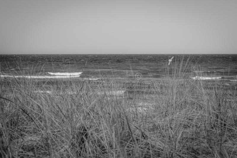 The beach of the Baltic Sea wind and swell. A beach of the Baltic Sea wind and swell royalty free stock photography