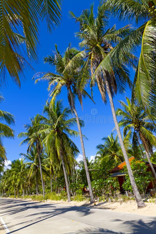 Beach Ban Krut Beach and coconut idyllic. At Prachuap Khirikhun Province, Thailand is famous for travel royalty free stock image