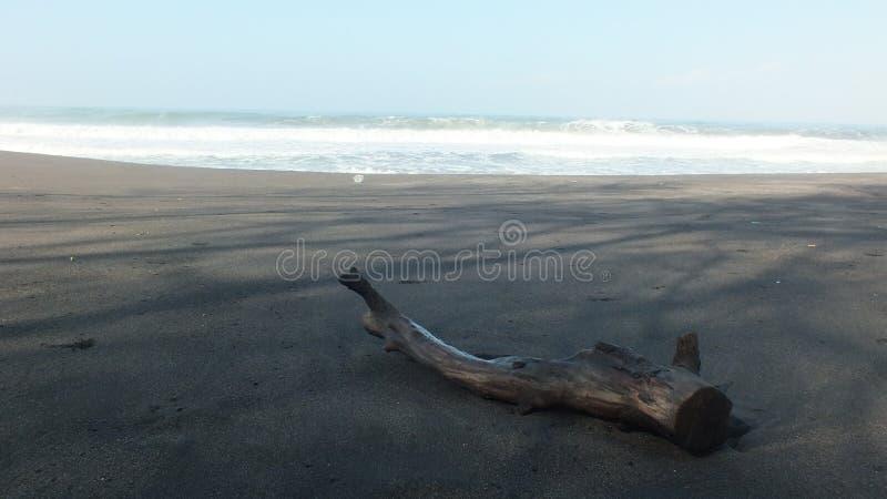 Beach baru, Central Java Indonesia. Beach baru in the morning, Central Java Indonesia royalty free stock photography