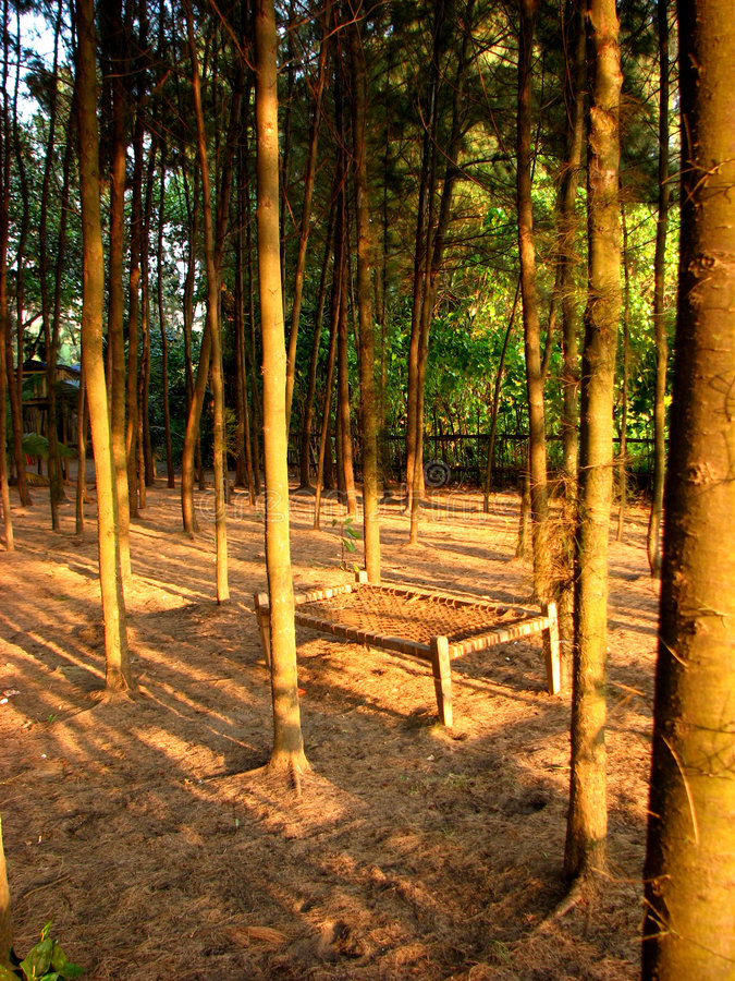 Download Beach Bed stock photo. Image of forest, background, jungle - 1973712