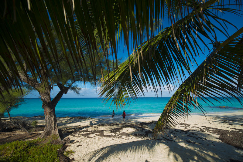 Beach on Bimini looking throungh palms. Bimini of the Bahamas beach with sparkling aqua waters and blue skies. sandy beaches with palm trees royalty free stock photo