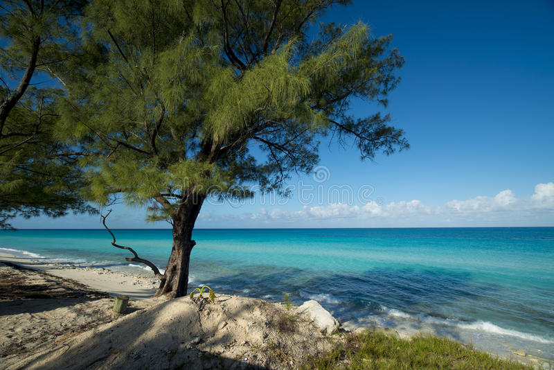 Beach on Bimini with trees. Bimini of the Bahamas beach with sparkling aqua waters and blue skies. sandy beaches with trees royalty free stock photo