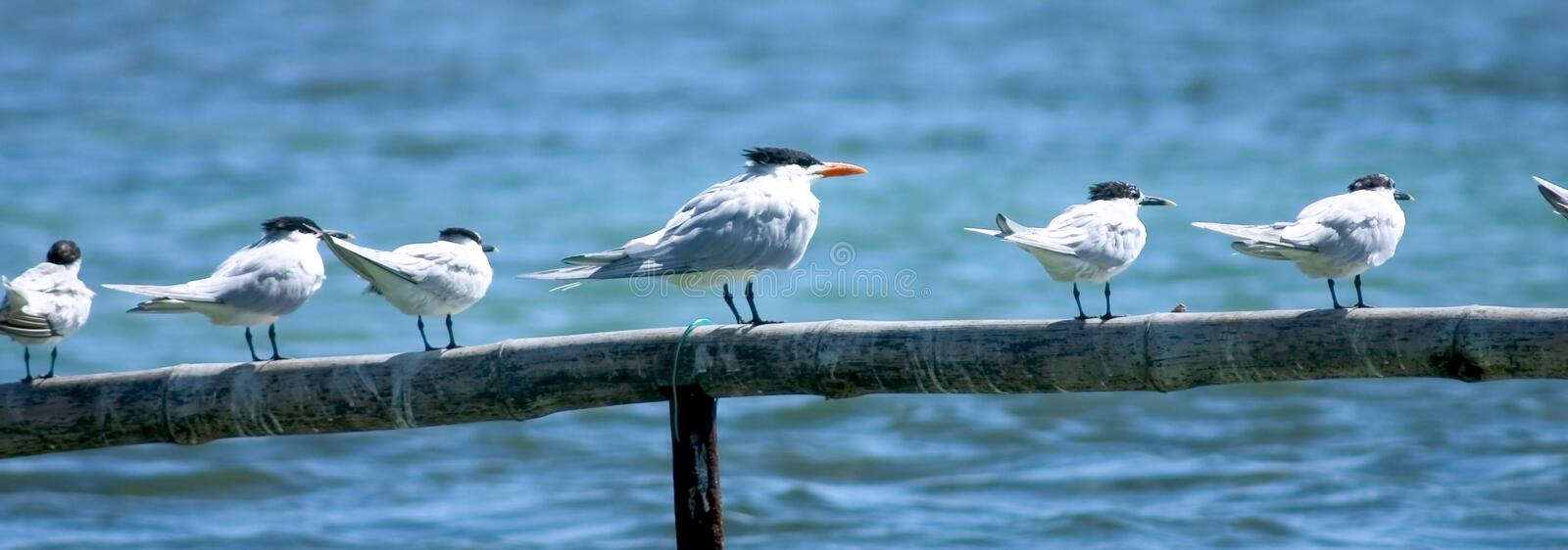 Download Beach Birds stock photo. Image of wood, nature, peace, blue - 107108
