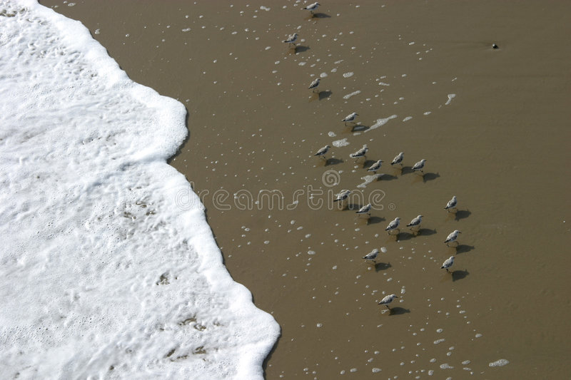 Download Beach Birds stock image. Image of coastal, froth, play, birds - 44137