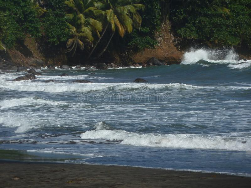 A beach of black sand, big waves and behind coconut trees. In the rocks stock images