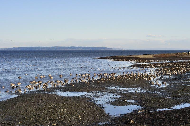 Beach of boundary bay regional park. Delta british columbia canada stock image