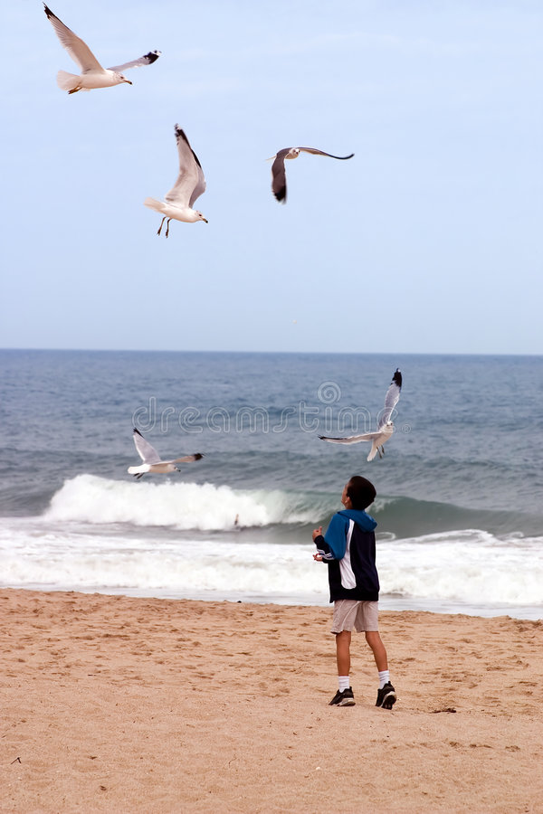 Beach Boy And Birds Royalty Free Stock Photos