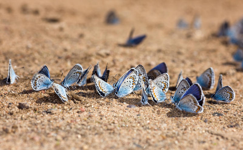 Download Beach for butterflies stock photo. Image of nature, beauty - 14860908
