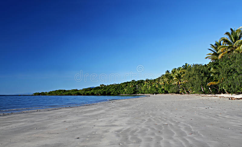 Beach at Cape Tribulation. Beach sand, Palm Trees and blue skies at Cape Tribulation Beach in Tropical Far North Queensland, Australia royalty free stock photography