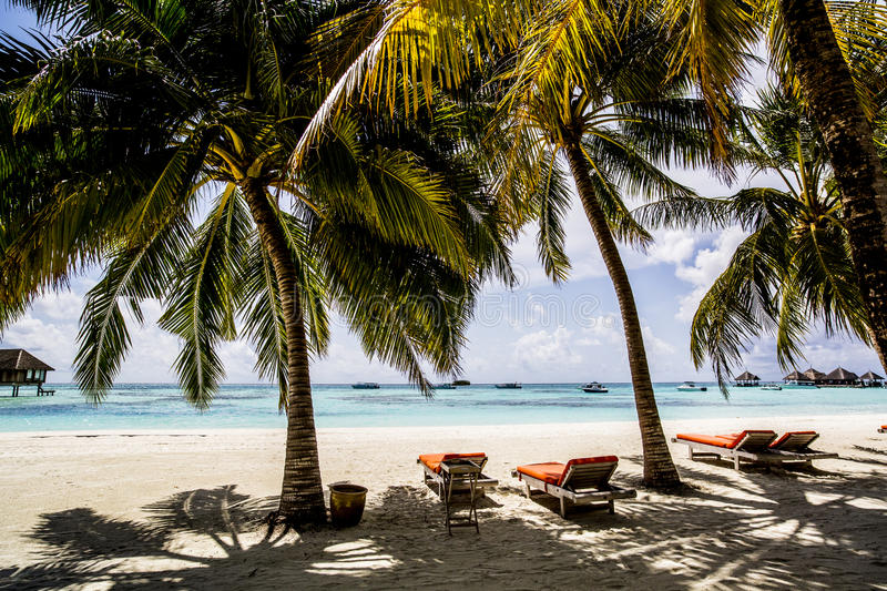 Download Beach chairs stock photo. Image of blue, nature, trees - 76229334