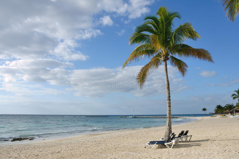 Download Beach Chairs Under Palm Tree On Tropical Beach Stock Image - Image: 18916547