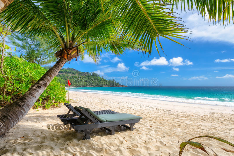 Download Beach Chairs Under A Palm Tree On Tropical Beach. Stock Photo    Image Of