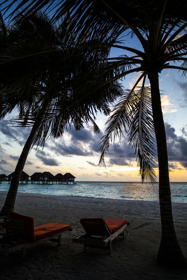 Download Beach Chairs Under Palm Trees At Maldives Resort Stock Photo - Image of outdoor, maldives: 75984750