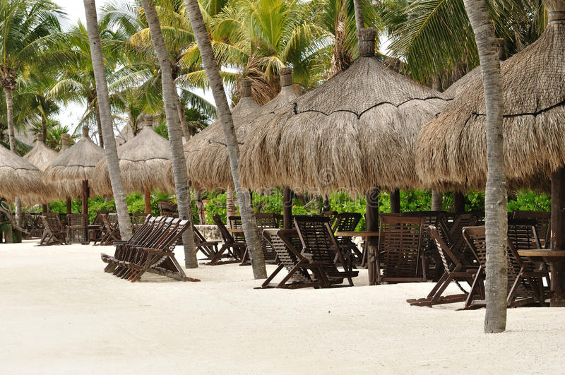 Download Beach Chairs Under Palm Trees On Tropical Beach Stock Image - Image: 19020761