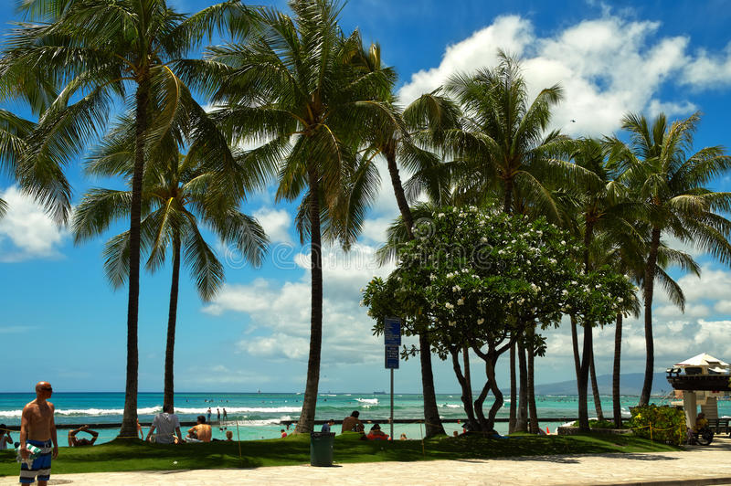 Beach on the coast of the Pacific Ocean, Hawaii royalty free stock photo