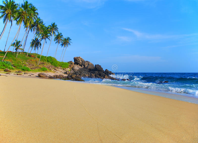 Download Beach With Coconut Palm Trees Stock Image - Image: 36701747