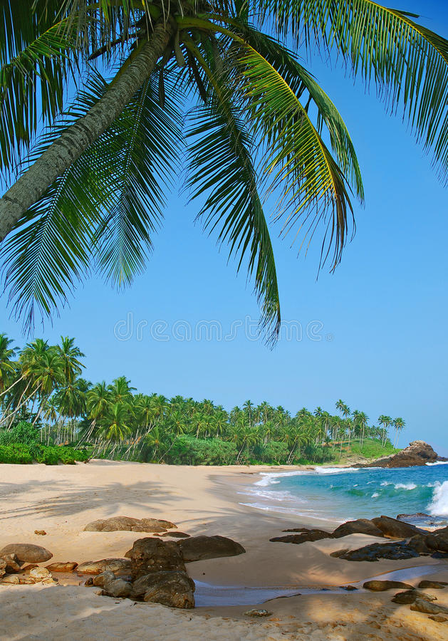 Download Beach With Coconut Palm Trees Stock Image - Image: 37166551