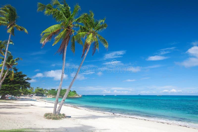 Beach and coconut plm tree, Langob beach, Malapascua island, Cebu royalty free stock images