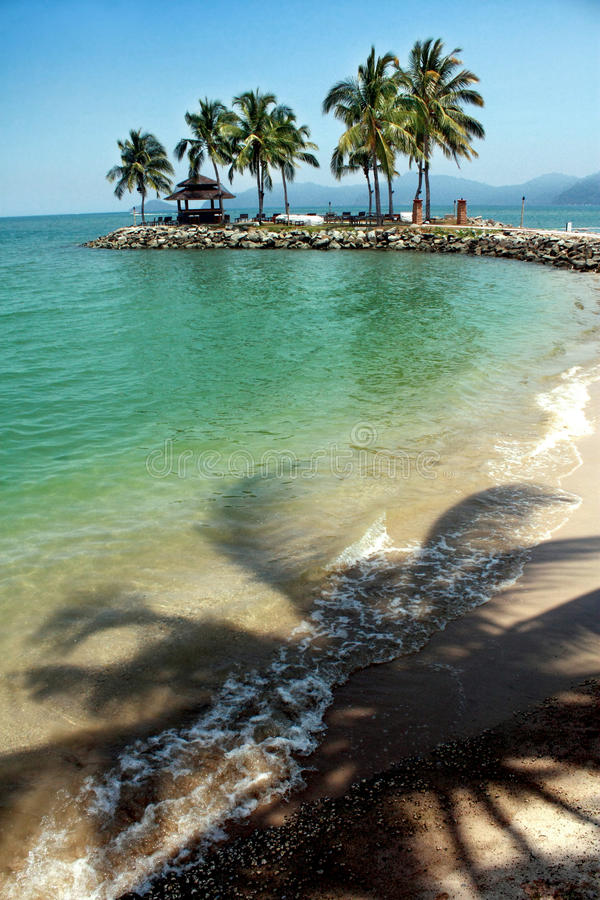 Beach with coconut trees royalty free stock photo