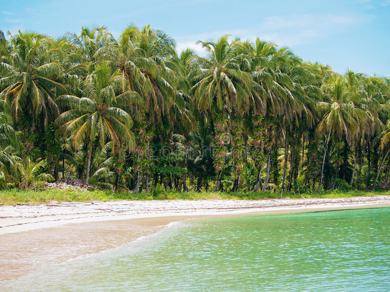 Beach With Coconuts Trees In Panama Royalty Free Stock Photos