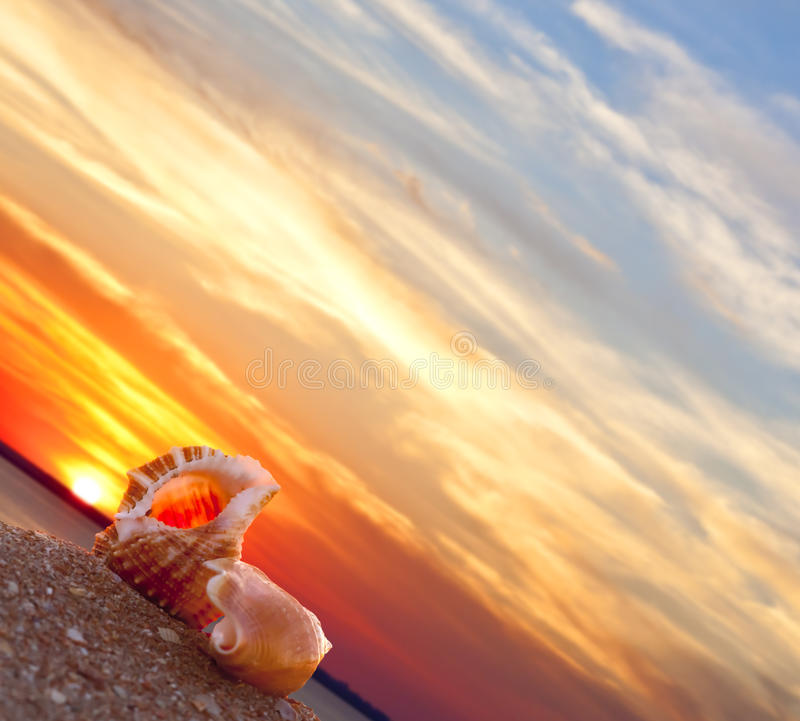 Free Beach Conch Stock Photography - 19186702