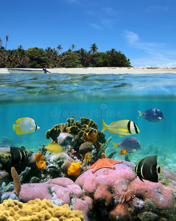 Beach and coral reef. Underwater and surface view with an unspoilt beach and a coral reef with tropical fish