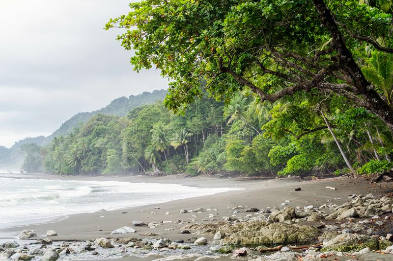 Beach with nobody on it - Rainforest Background in Corcovado National Park, Costa Rica. Beach, Corcovado Park Costa Rica stock photo
