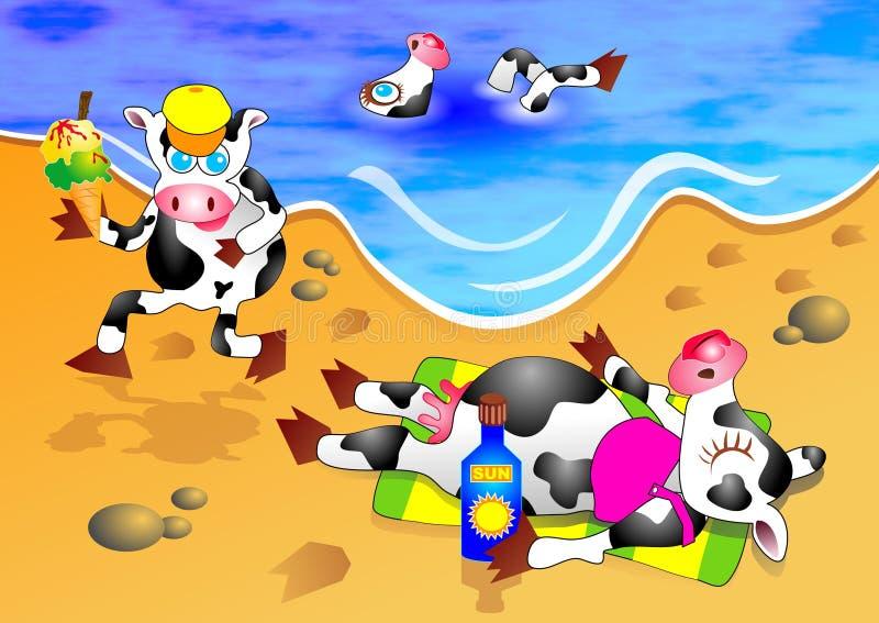 Beach Cows stock photos