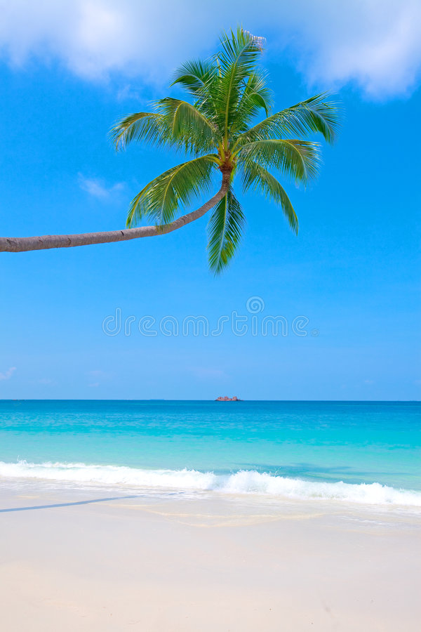 Beach with crystal clear blue waters and palm tree royalty free stock images