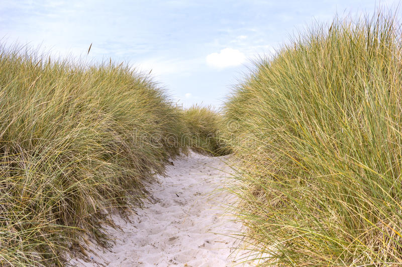 On the Beach, Darsser Ort. Sand dune with European beachgrass on the beach of the Darsser Ort. The west coast of the peninsula Fischland-Darss-Zingst is one of stock image