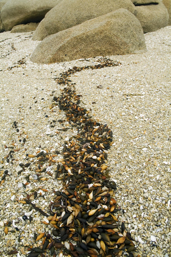 Beach Details. Of sand, shells and rocks stock photography
