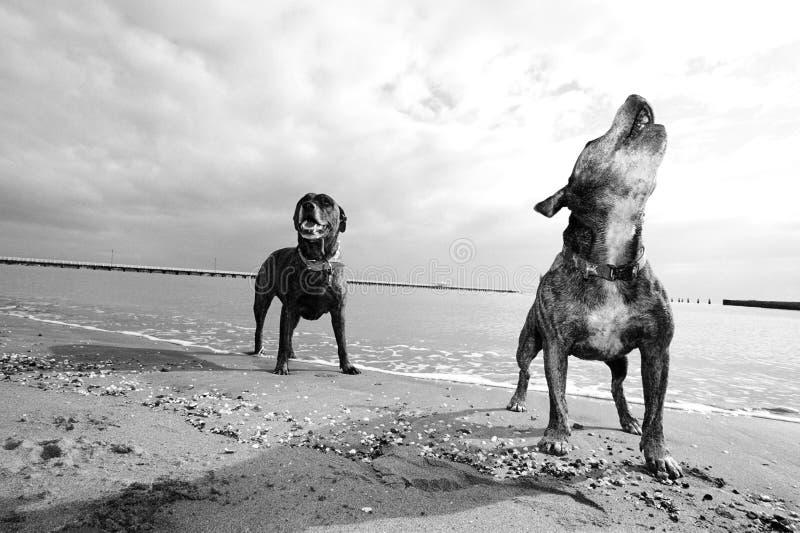 Beach dogs royalty free stock photos